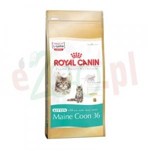 ROYAL CANIN CAT KITTEN MAINE COON 4 KG
